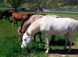 facilitadors-equins