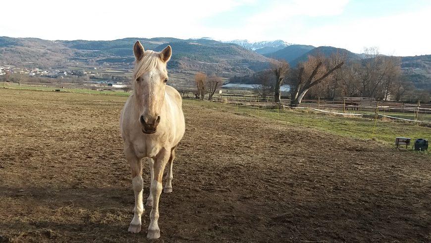 Equànima Coaching amb cavalls etologia ecoturisme