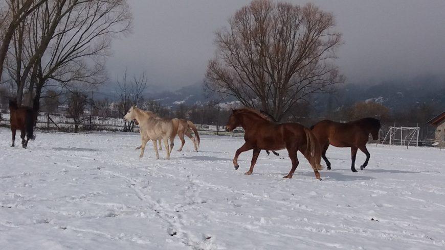 Equànima coaching amb cavalls