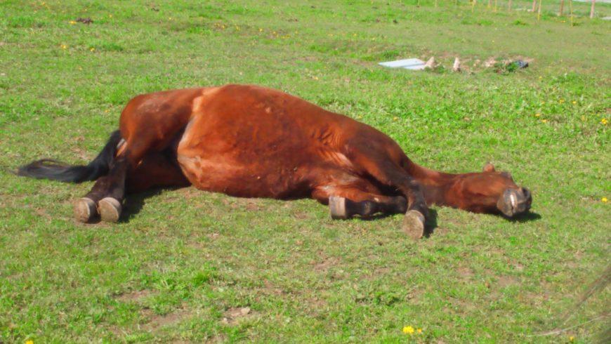 Equànima coaching cavalls